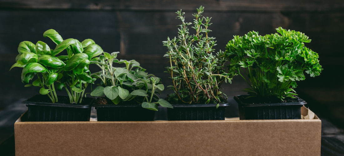 Growing Herbs in Your Kitchen